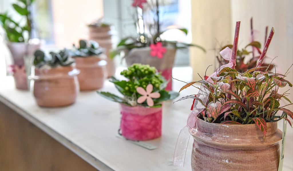 Blumen Altenberg
