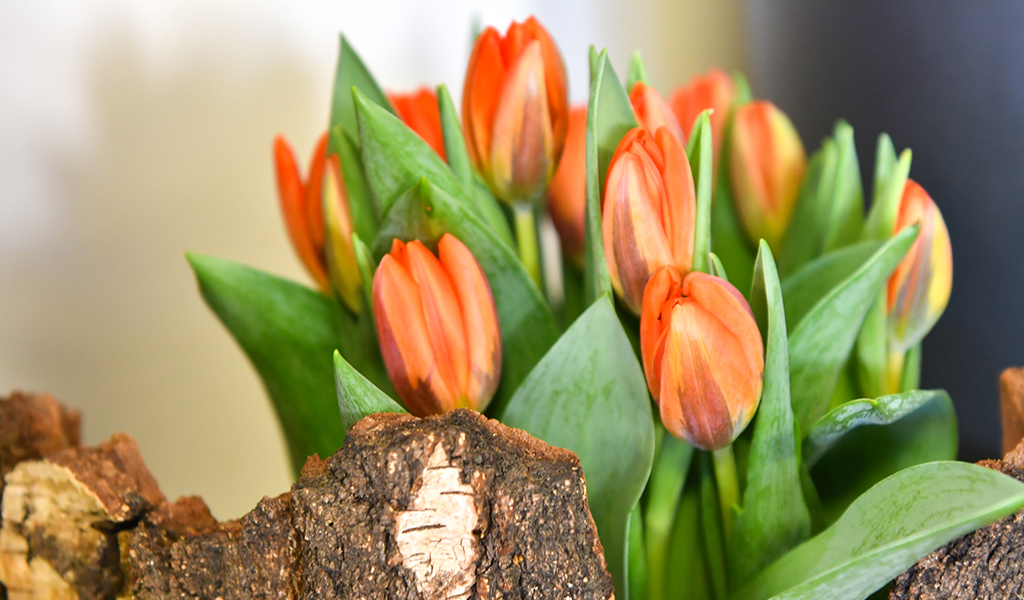 Tulpen by Stummer Barbara